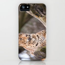 Sri Lankan Leopard iPhone Case