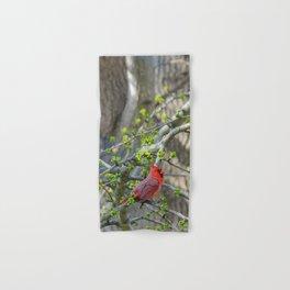 His Majesty the Cardinal Hand & Bath Towel