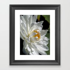 Lotus White Framed Art Print