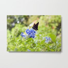Butterfly on a Purple Flower Photography Print Metal Print