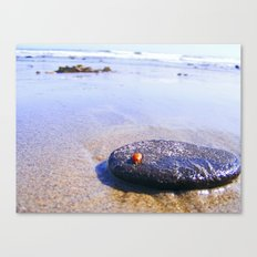 Lady Bug On Vacation Canvas Print