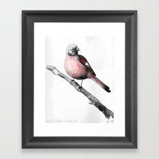Fink (Karmingimpel)   Finch (Rosefinch) Framed Art Print