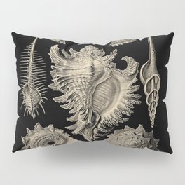 """Prosobranchia"" from ""Art Forms of Nature"" by Ernst Haeckel Pillow Sham"
