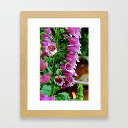 Foxglove Delight Framed Art Print