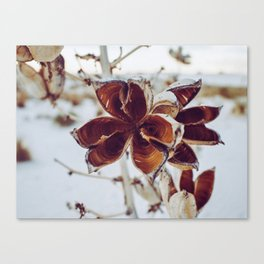 White Orange Flower Canvas Print
