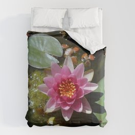 Water lily top view sunny day Comforters