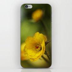 yellow. iPhone & iPod Skin