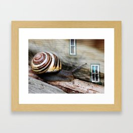 Snail :: Room with a View Framed Art Print