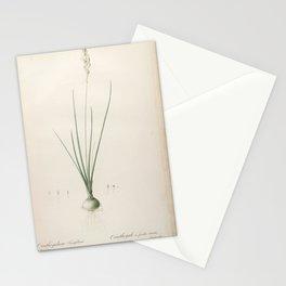 ornithogalum tenuifolium Redoute Roses 2 Stationery Cards