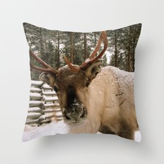 Adorable In The Arctic Throw Pillow