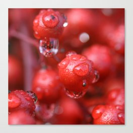 Red Rain Canvas Print
