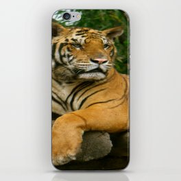 hai der tiger iPhone Skin