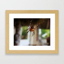 Charlies Web Framed Art Print