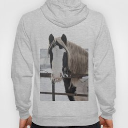 Horse by the fence Hoody