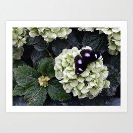 Black Butterfy Art Print