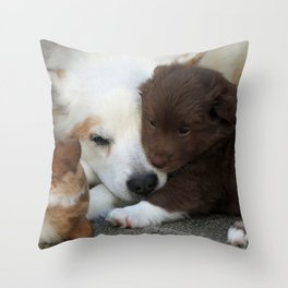 IcelandicSheepdog_20171203_by_JAMFoto Throw Pillow