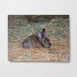 A Rabbit's Comfort Zone Metal Print