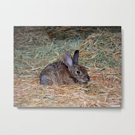 A Rabbit's Comfort Zone Metal Print