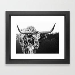 Longhorn Stare Framed Art Print