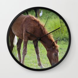 Wild Spanish mustang colt Wall Clock