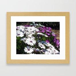 Daisy Weather Framed Art Print