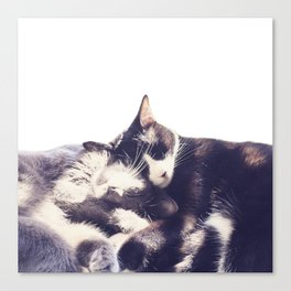 Cats again Canvas Print