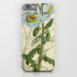 Flower 4668 meconopsis wallichii Dr Wallich s Meconopsis1 iPhone Case