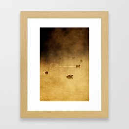 COOTS IN LAKE Framed Art Print