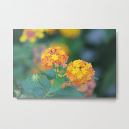 Pretty Sweet Floral Orange And Yellow Blossoms Metal Print