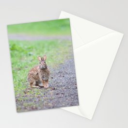 Rabbit in the Path Stationery Cards