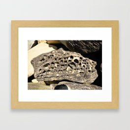 Stone Lace Small Boulder Chuckanut Formation Bellingham Washington Geology Framed Art Print