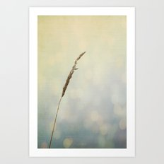 Reflections of a Summer Lake Art Print