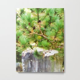 Evergreen tree branches with cones Metal Print