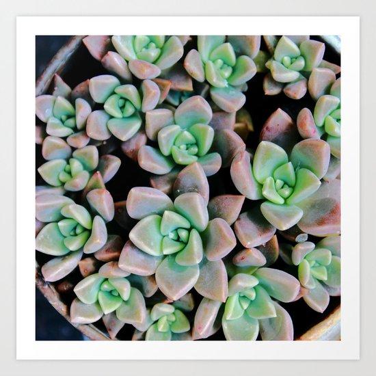 Succulent plants Art Print