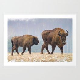 Cow and a calf Art Print