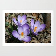 Garden Flowers Art Print