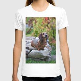 Autumn Dachshund T-shirt