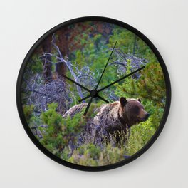 Grizzly mother watches over the area as her young cubs play nearby Wall Clock