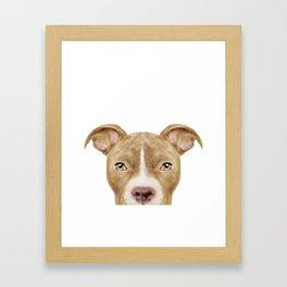 Pit Bull light Brown 2,Dog illustration original painting print Framed Art Print