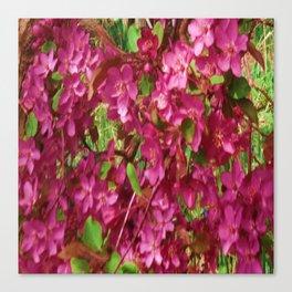 PINK CRABAPPLE SPRING MODERN ART Canvas Print