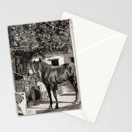 black horse Golega Portugal Stationery Cards
