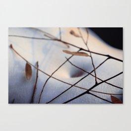 cold breeze Canvas Print