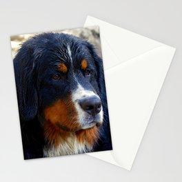 Bernese Mountain Dog Enjoying the Day Stationery Cards