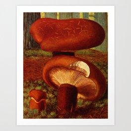 Paxillus atro-teomentosus Art Print