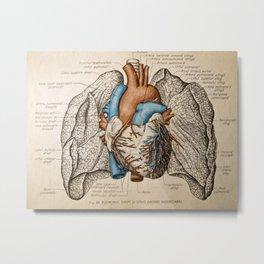 Vintage anatomy illustration Metal Print