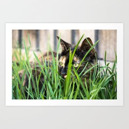 Cat in grass Art Print