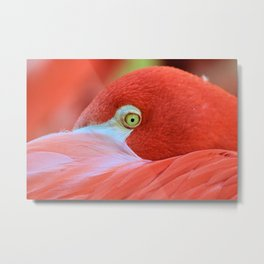 Watching Me Watching You Flamingo by Reay of Light Metal Print