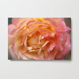 Rose Pink&Yellow Metal Print