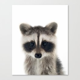 Baby Racoon Canvas Print