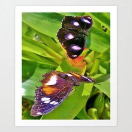 Butterflies Chatting Art Print